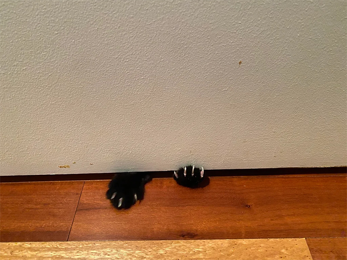 cats paws under the bathroom door