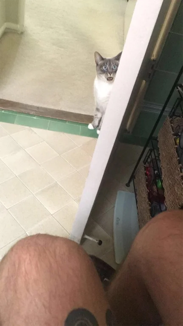 cats reaction watching people in the toilet