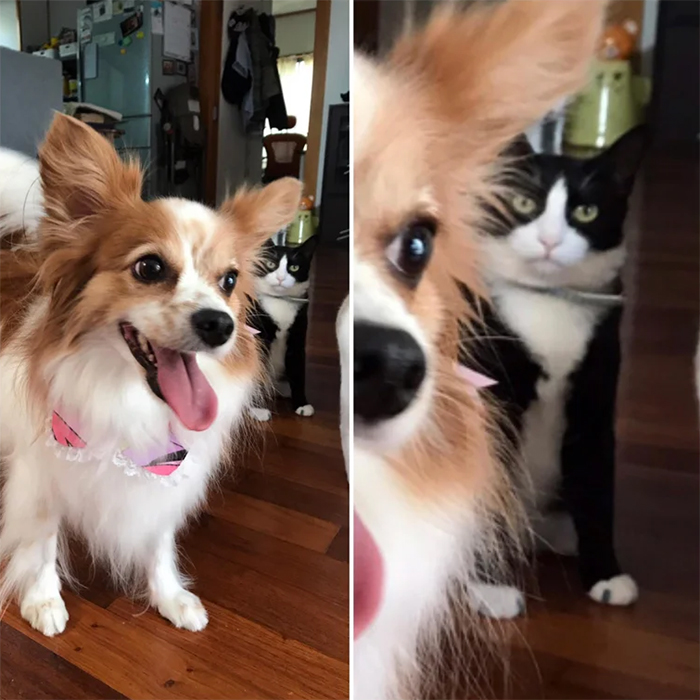 cats unhappy with dogs in the house
