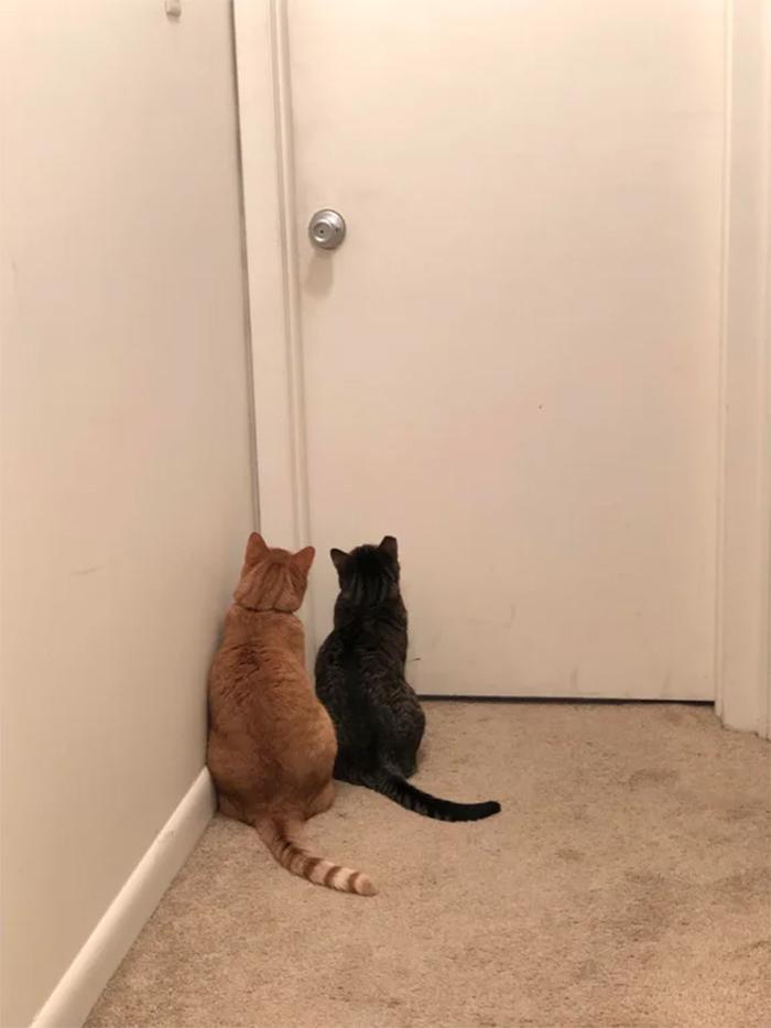 cats waiting at bathroom door