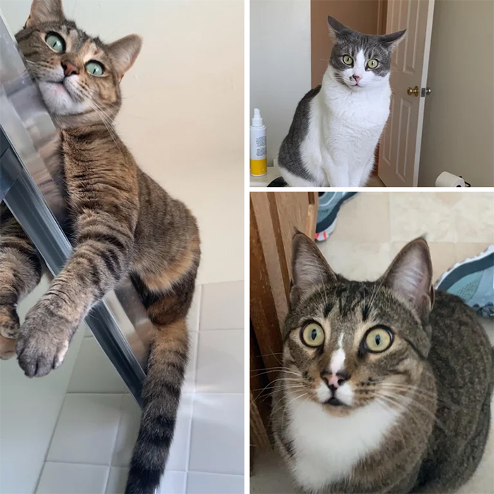 cats watching their human take a shower