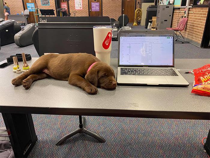 coworker dog on the desk