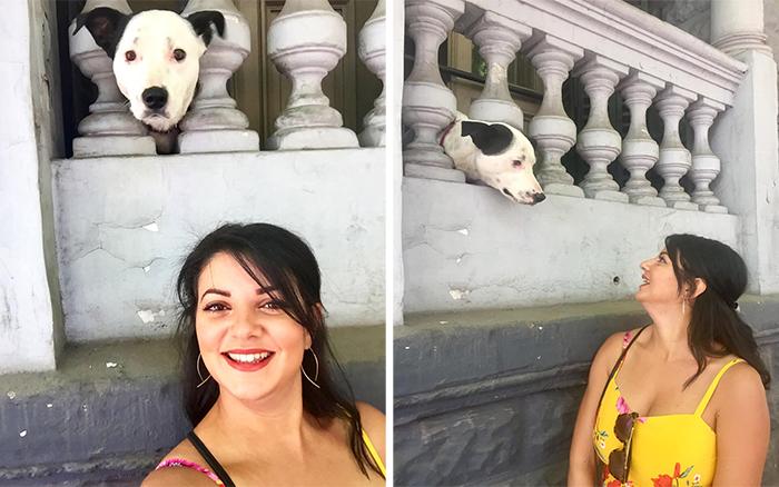 cutest canine photobomber