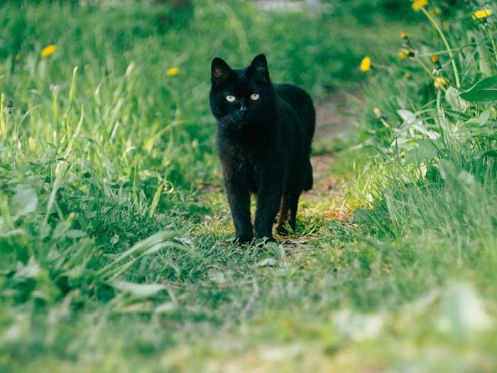 daria-shatova-black-cat-pauses-in-grassy-trail-unsplash