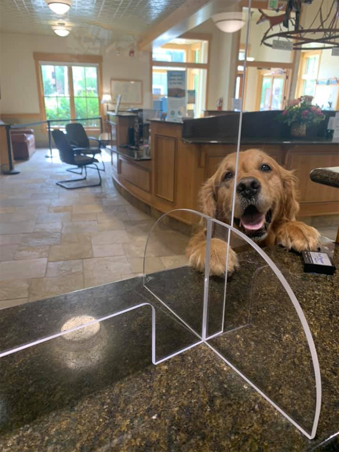 dog at the bank counter