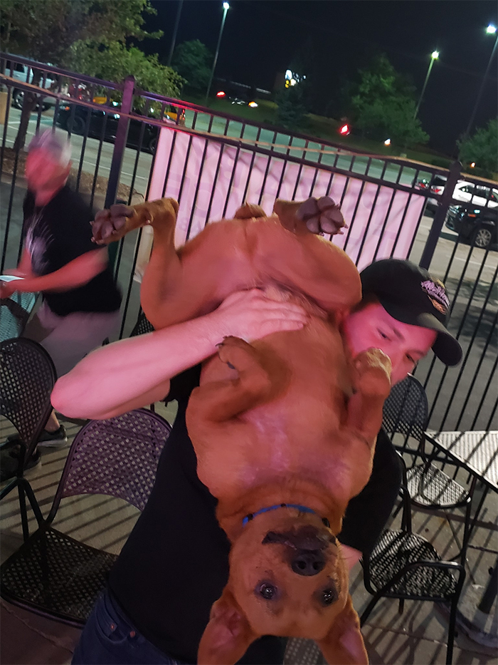 dog at the bar carried upside down