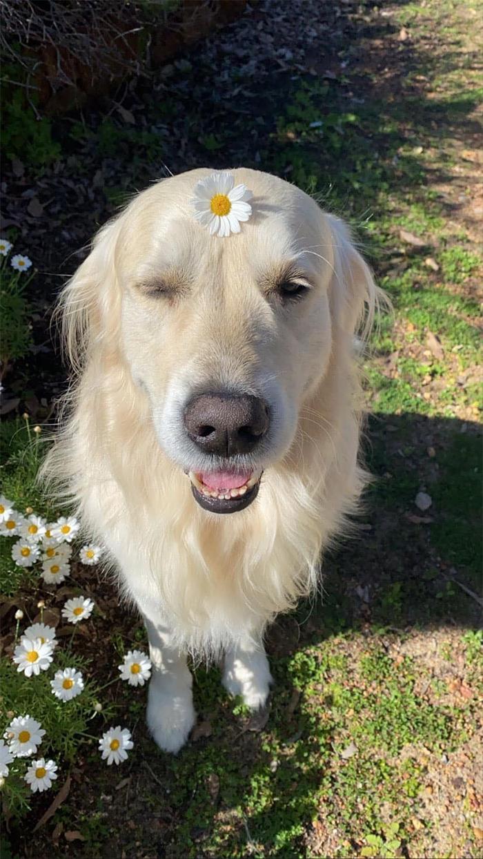 dog flower forehead