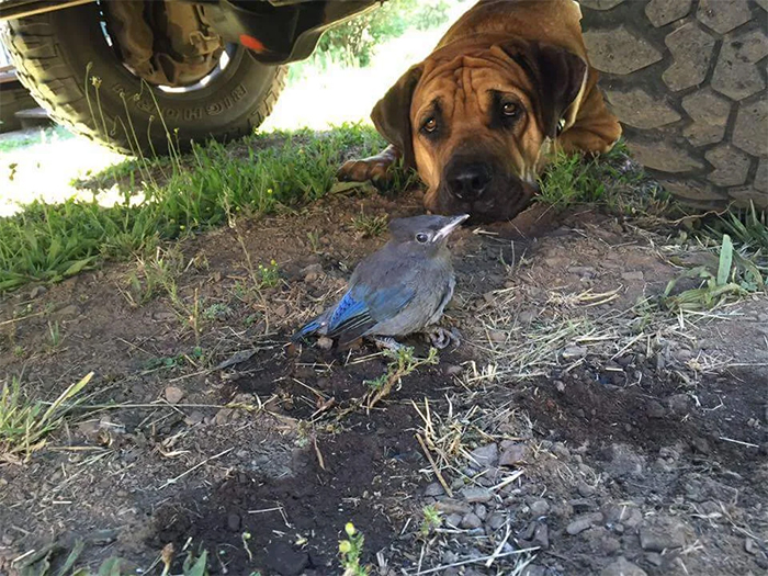 dog guards a bird with broken wing