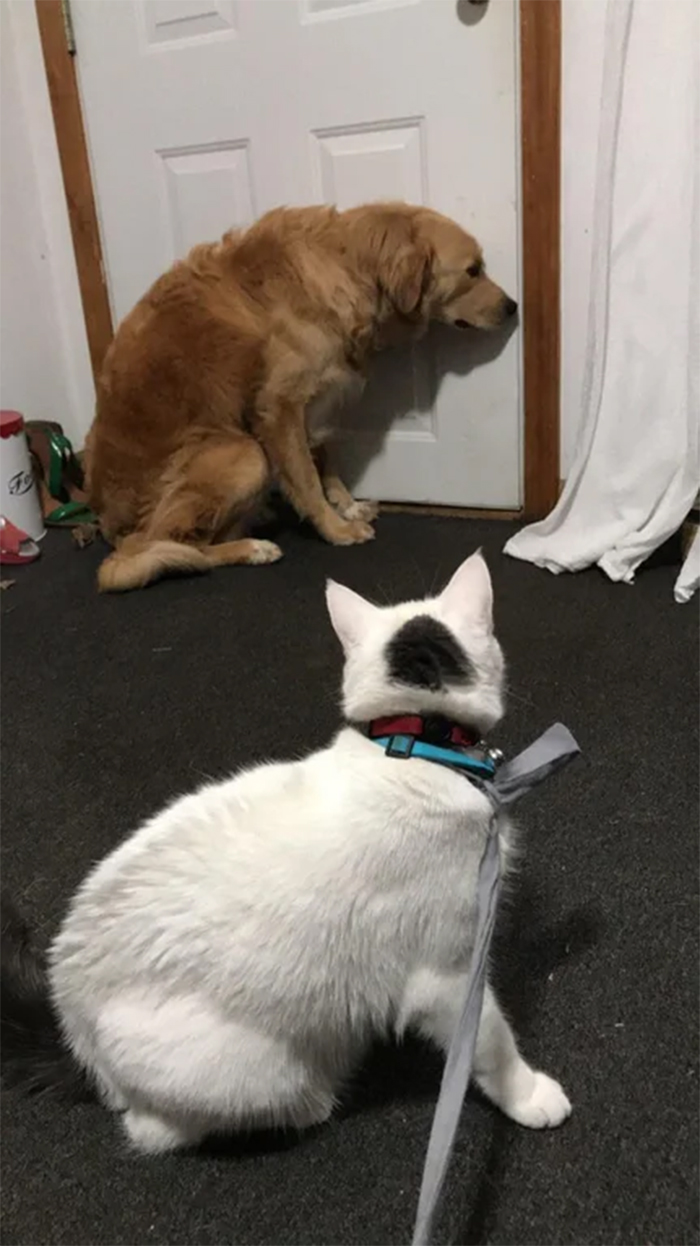 dog scared of the fluffy kitty
