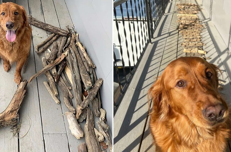 dog stick collection