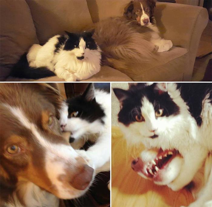 dog tolerates feisty kitty