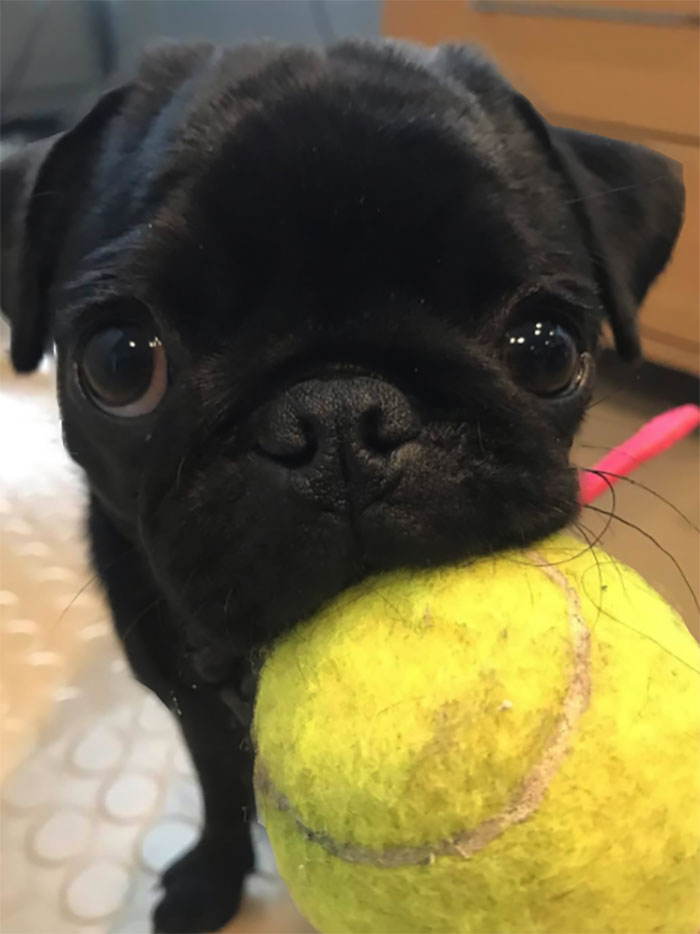 dog with ball came to play