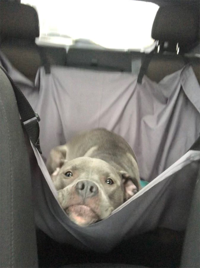 doggo car ride hammock
