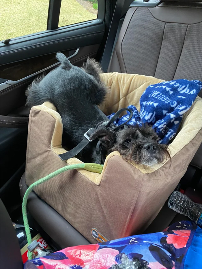 doggo comfortable in the car seat