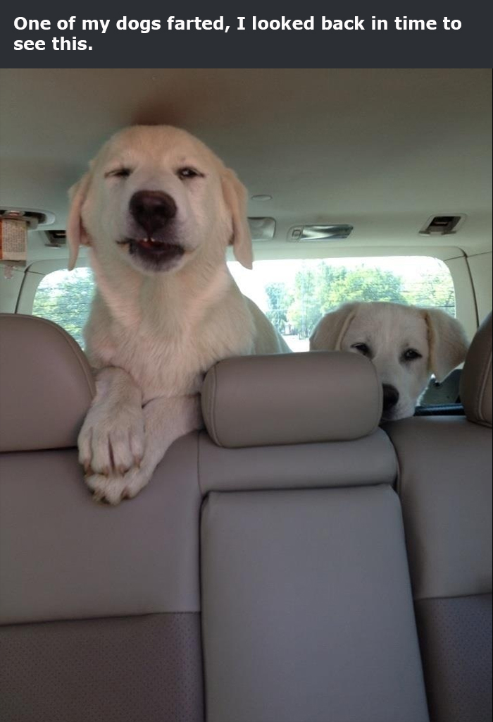doggo farted priceless reaction