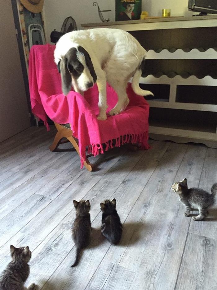 doggo scared of kittens