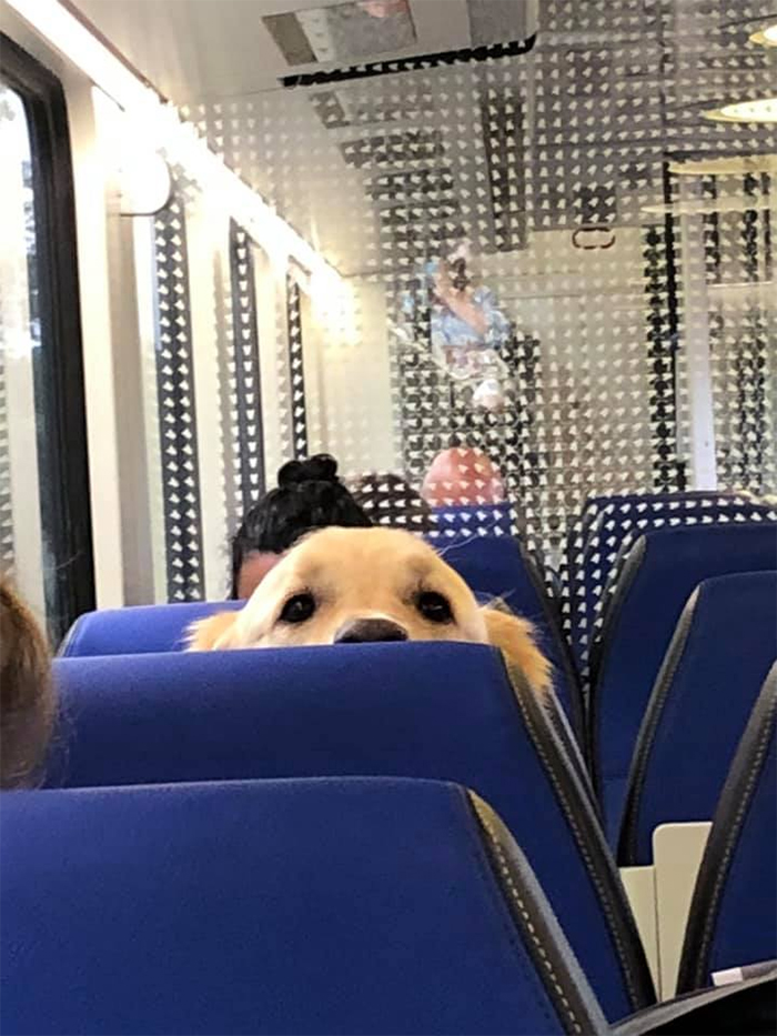 dogspotting at the train
