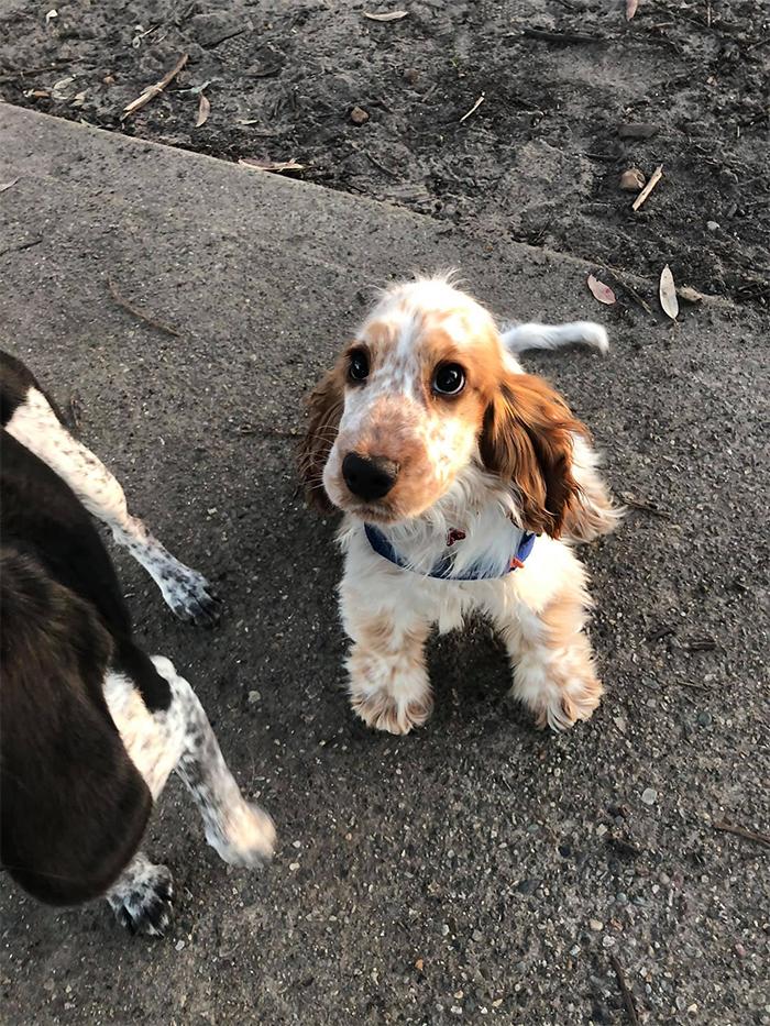 dogspotting dog with puppy eyes
