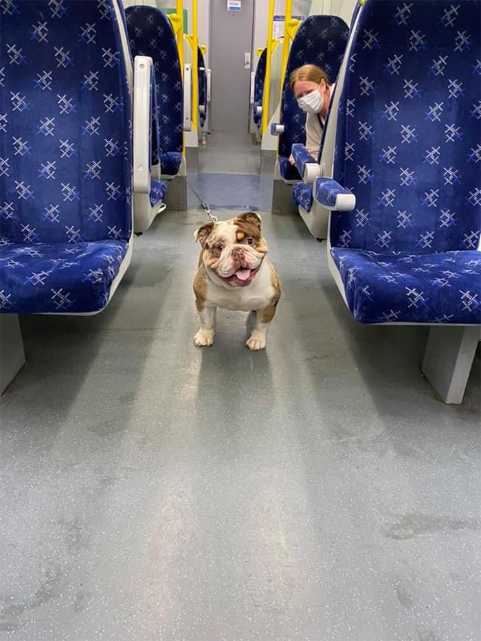 dogspotting friendly canine passenger