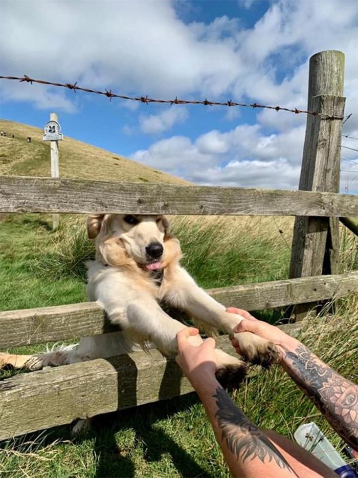 dogspotting handshake through the fence