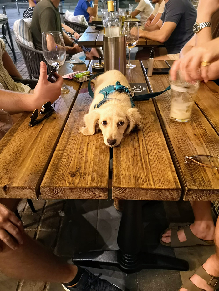 dogspotting pup in the pub