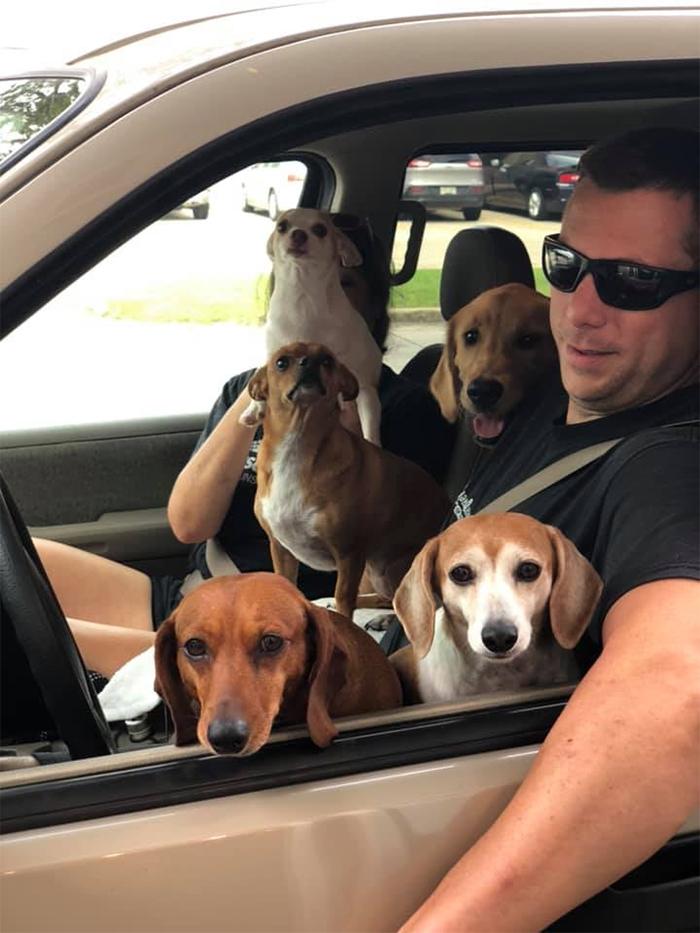 drivethru car full of dogs