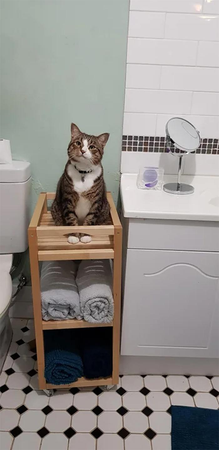 feline professional shower supervisor
