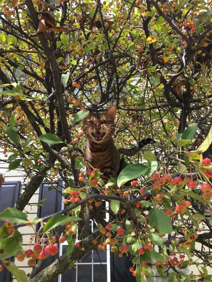 fierce kitty in a cherry tree