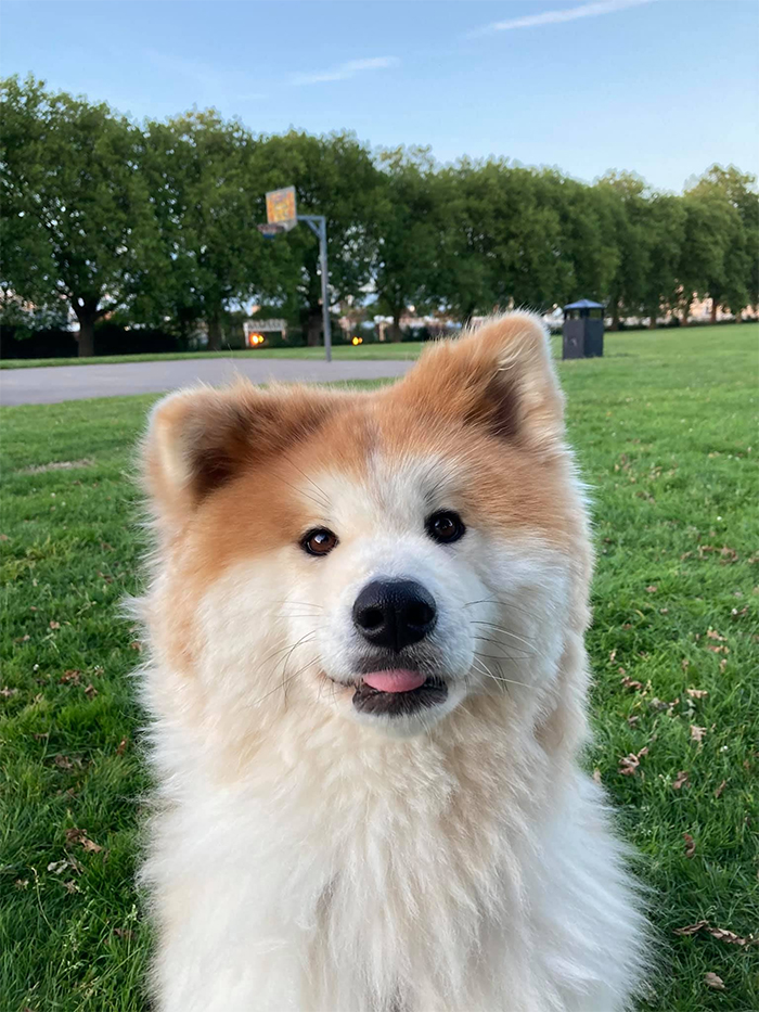 fluffball at the park