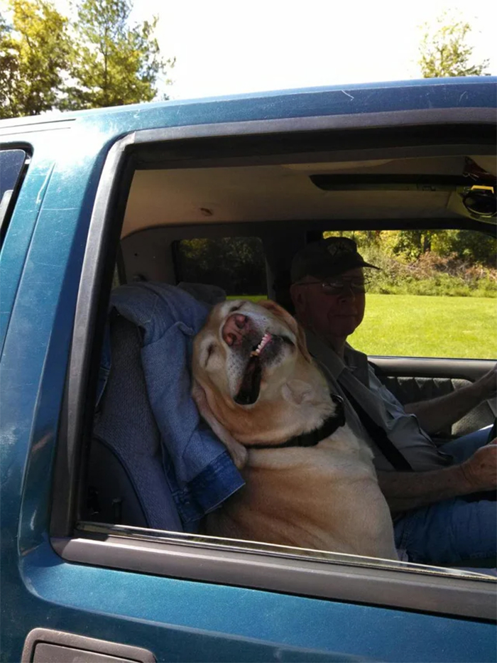 funny dogs enjoying a car ride