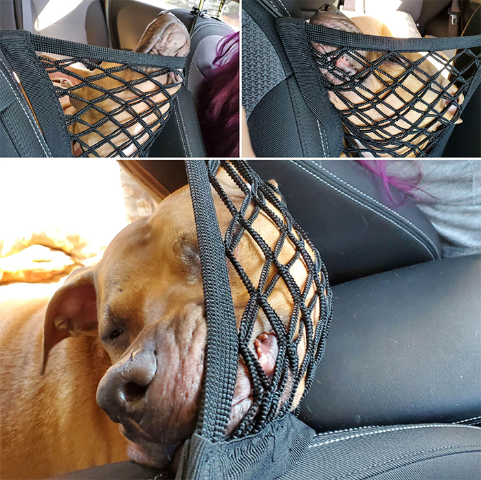 funny dogs riding in the car net