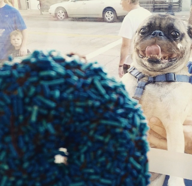 funny shops posts picture of happy pug seeing a donut