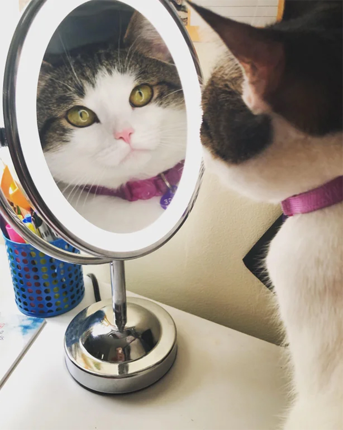 furry kitty looking at the mirror