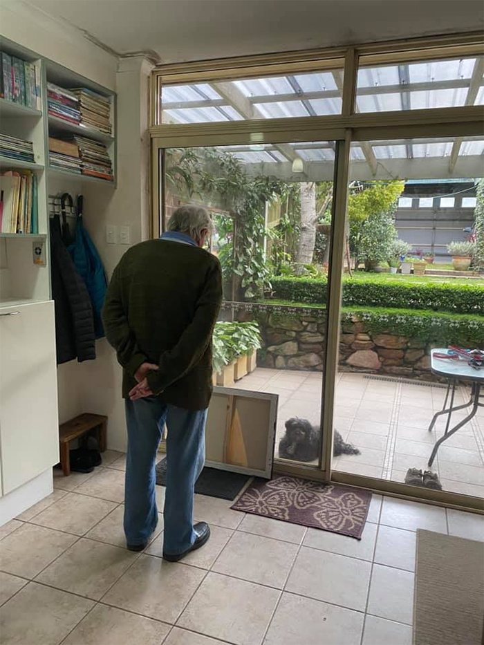 grandpa entertains stray dog by showing paintings
