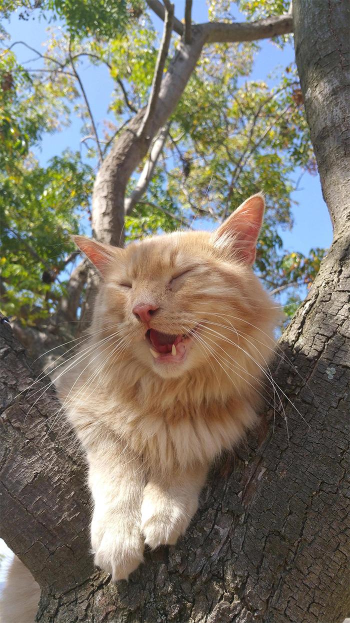 happy cats in trees