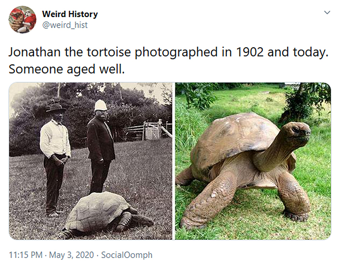 interesting historical facts jonathan the tortoise