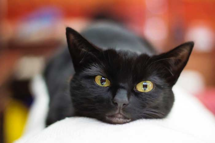 jonathan-cosens-photography-unsplash-black cat