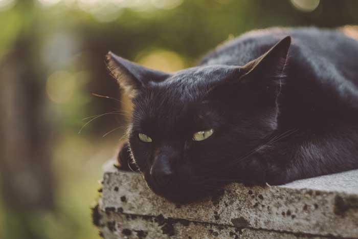 kazuky-akayashi-sad-black-cat-unsplash