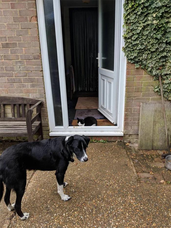 kitten blocking the doorway for dog