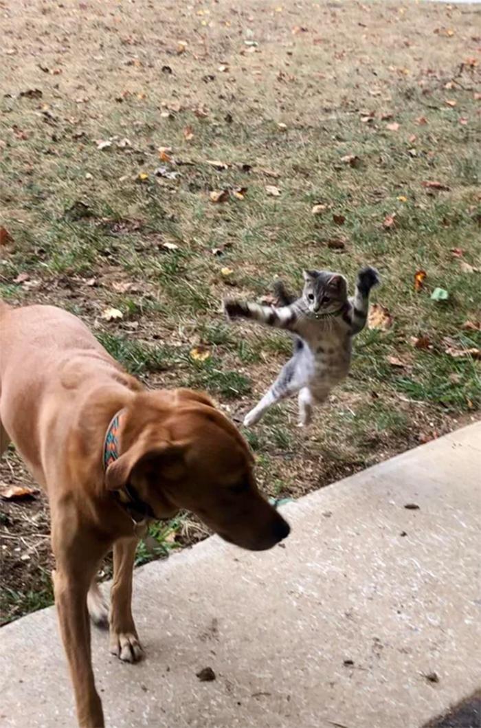 kitty attacking doggo