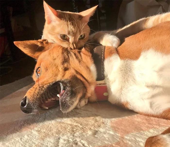 kitty bites doggo