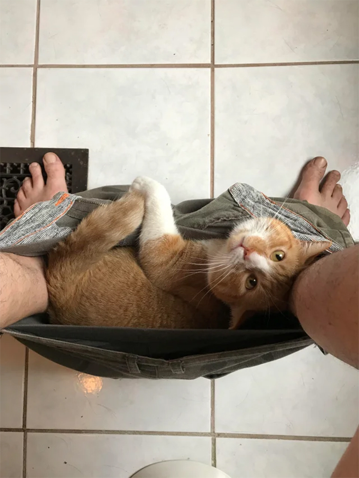 kitty chilling in human pants
