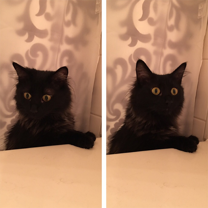 kitty concerned about human in the bath tub