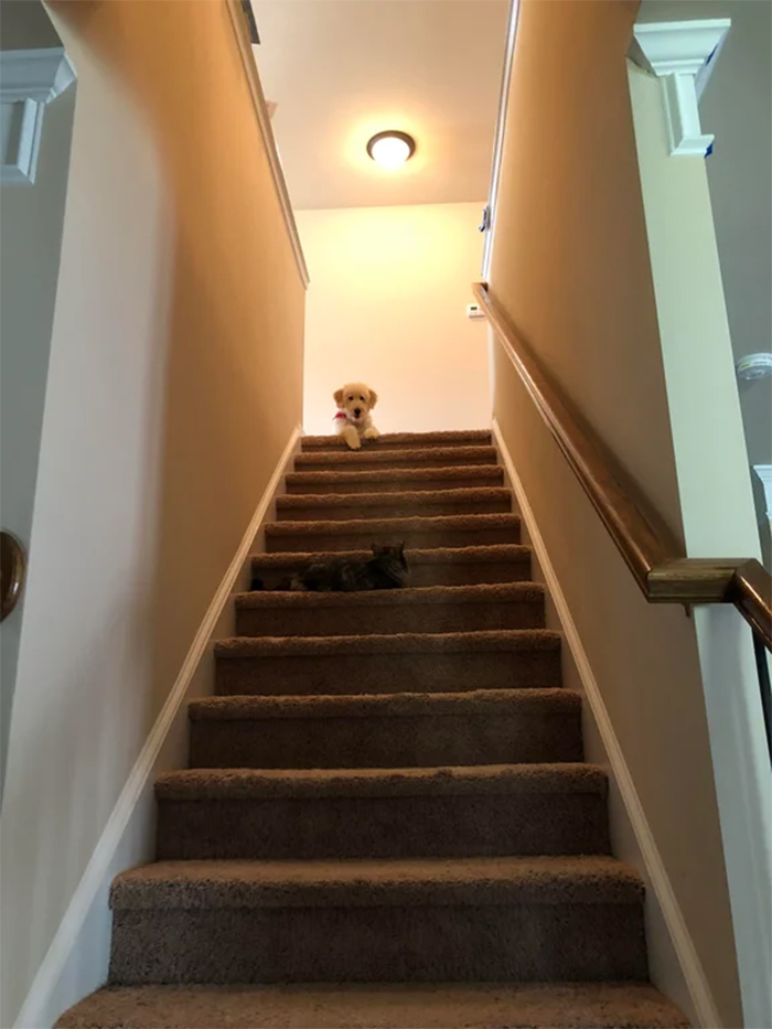 kitty controls the stairs