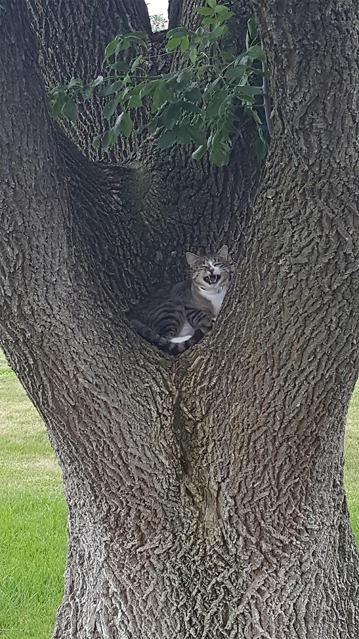 kitty found a cozy nook in a tree