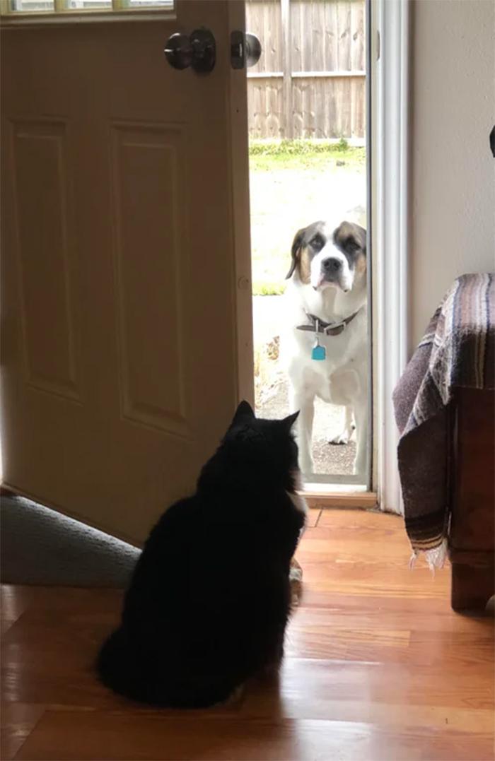 kitty gatekeeper