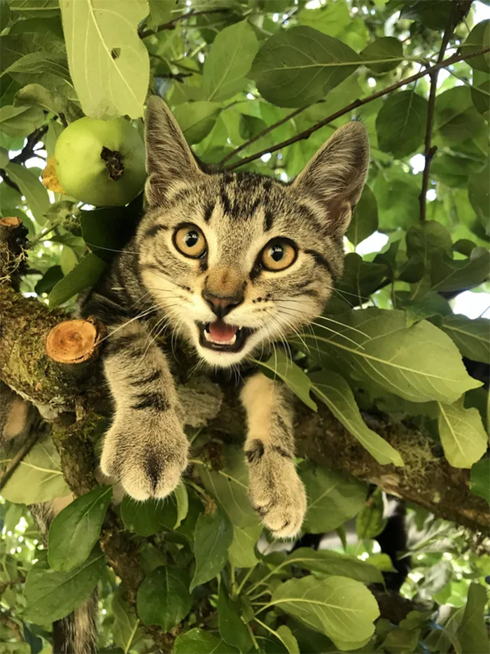 kitty got stuck in a tree