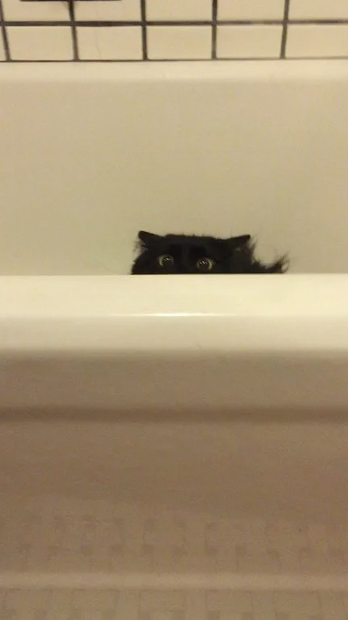 kitty hiding in the bath tub
