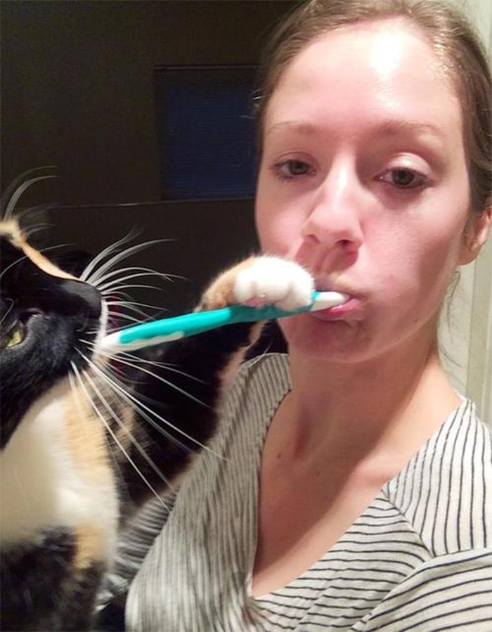 kitty holding toothbrush for owner