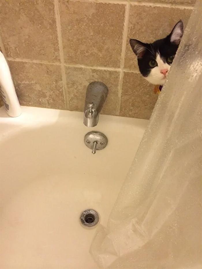 kitty peeking in the shower